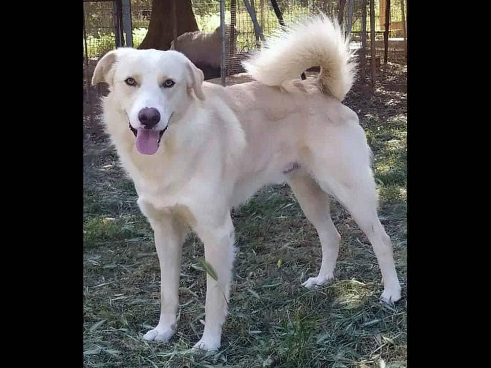 Adotta un cane: Babà - Amici Degli Animali