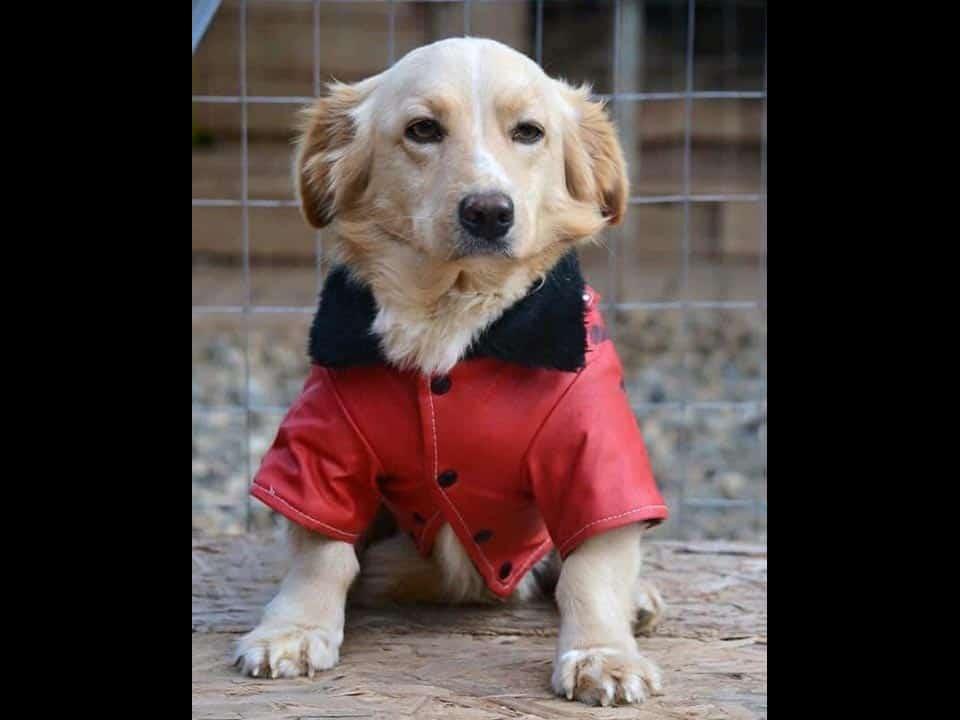 Adotta un cane: Brando - Amici Degli Animali