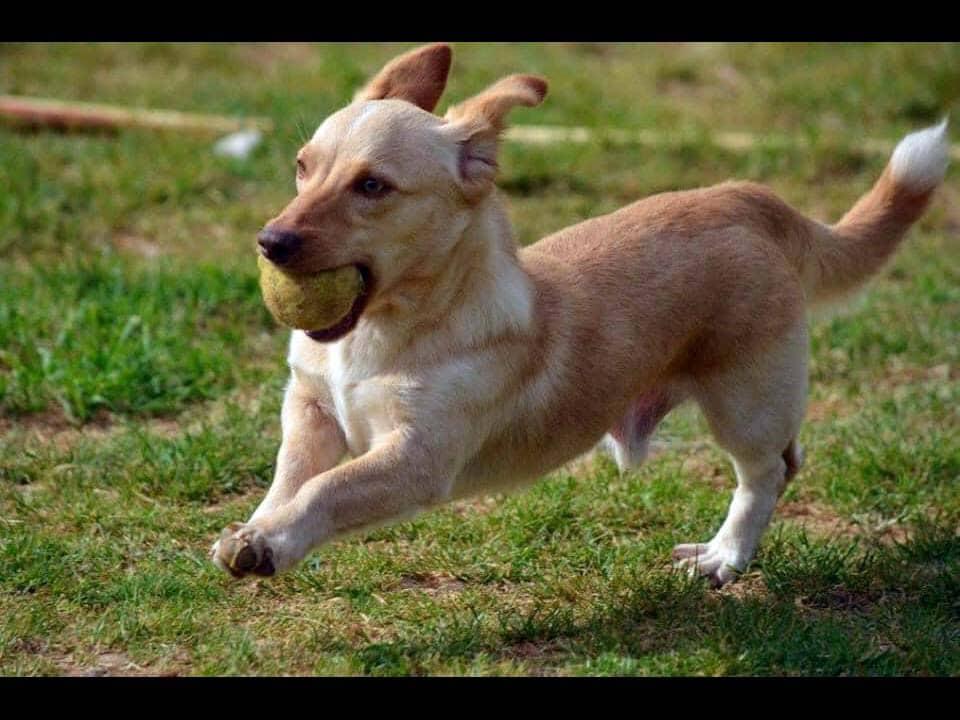 Adotta un cane: Domenico - Amici Degli Animali