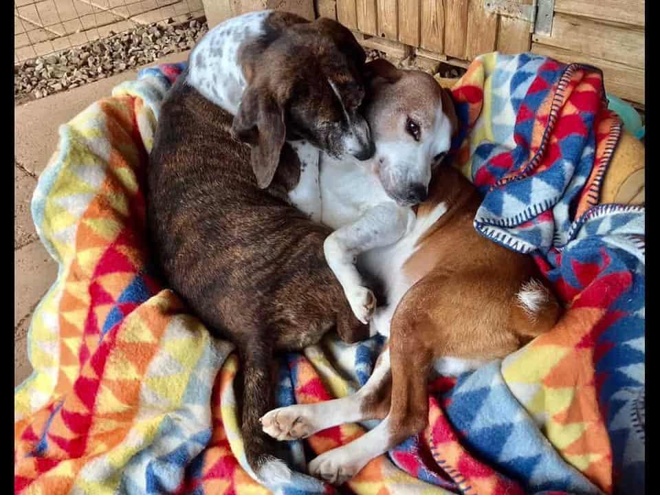 Adotta un cane: Fred e Wilma - Amici Degli Animali
