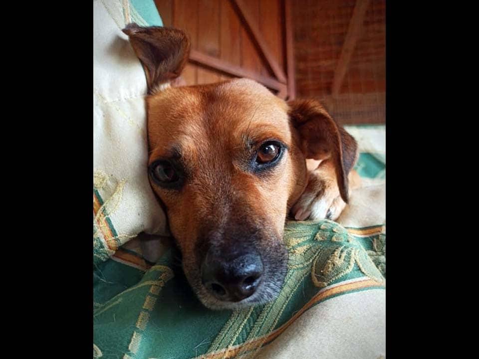 Adotta un cane: Ivan - Amici Degli Animali