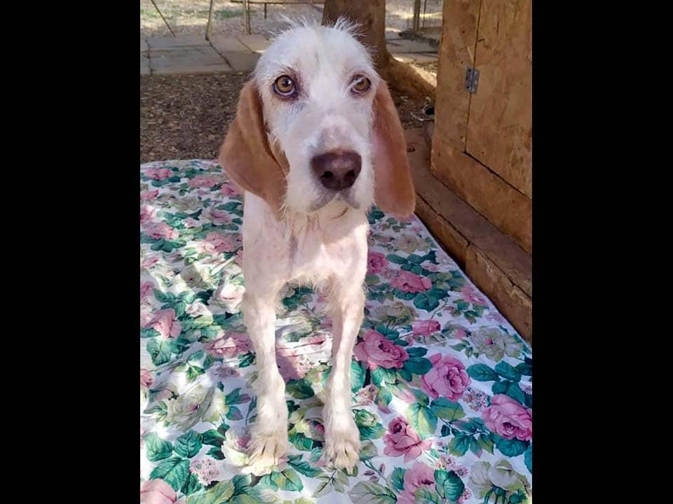 Adotta un cane: Roberta - Amici Degli Animali