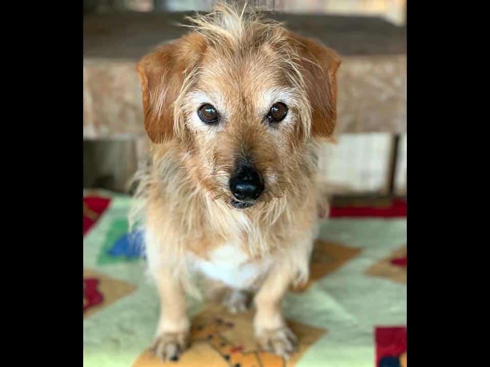 Adotta un cane: Romeo - Amici Degli Animali