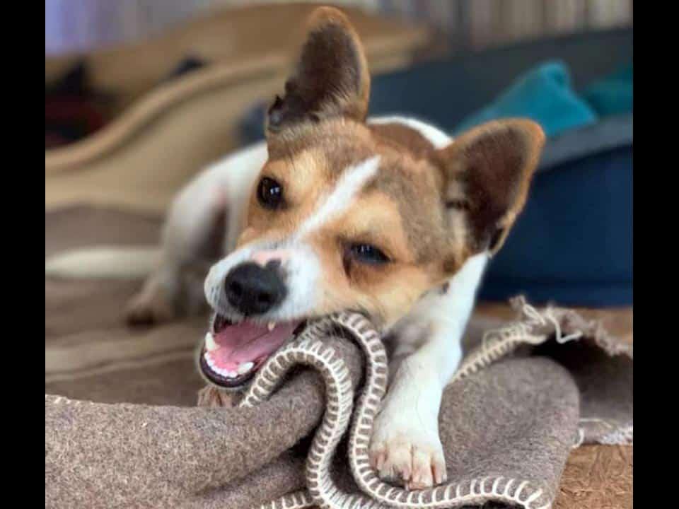 Adotta un cane: Russell - Amici Degli Animali