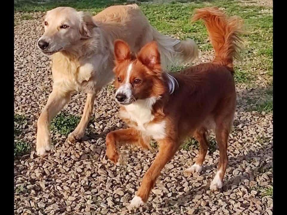 Adotta un cane: Samir e Tommaso - Amici Degli Animali
