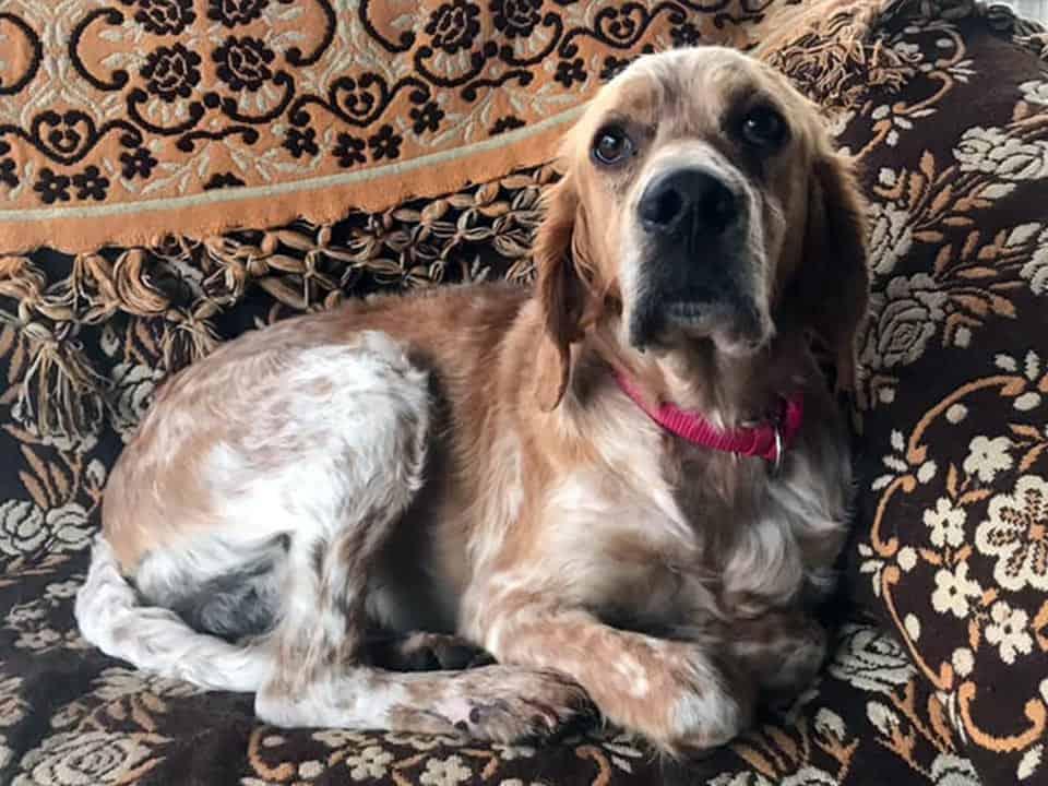 Adotta un cane: Stefania - Amici Degli Animali