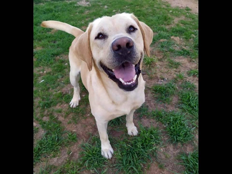 Adotta un cane: Teo - Amici Degli Animali