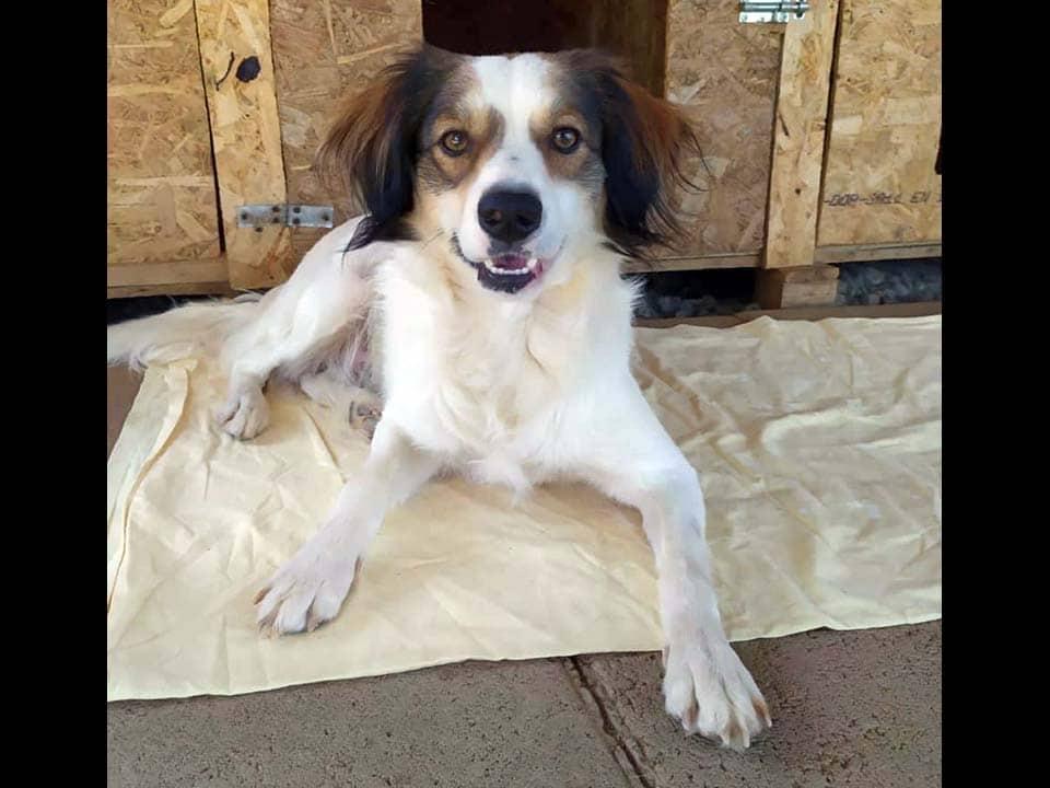 Adotta un cane: Zack - Amici Degli Animali