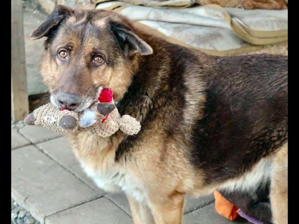 Adotta un cane: Zeus - Amici Degli Animali