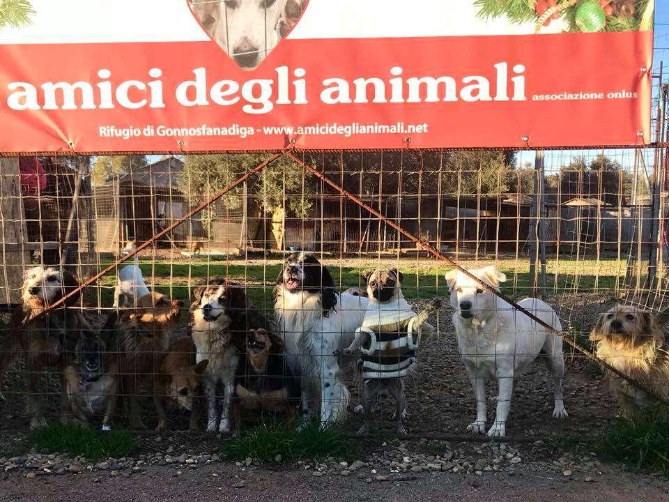 Amici Degli Animali - Buon 2019