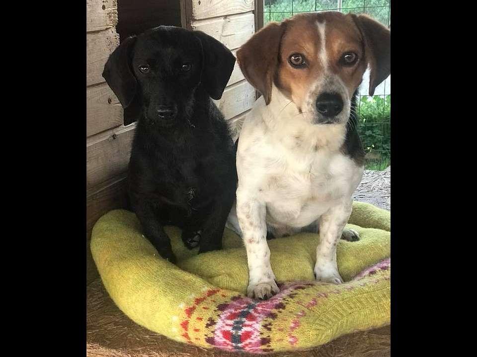 Amici Degli Animali - Lilly e Nando