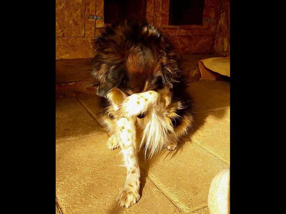 Amici Degli Animali - Lucy
