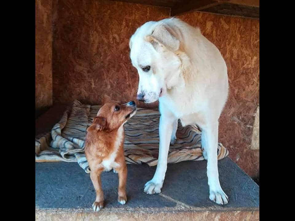Amici Degli Animali - Noah e Blanco