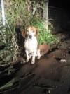 Barney legato alla recinzione del rifugio 04/02/16