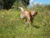Adotta un cane - Chanel - Amici degli animali
