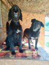 Adotta un cane - Ciuky e Iole - Amici degli animali