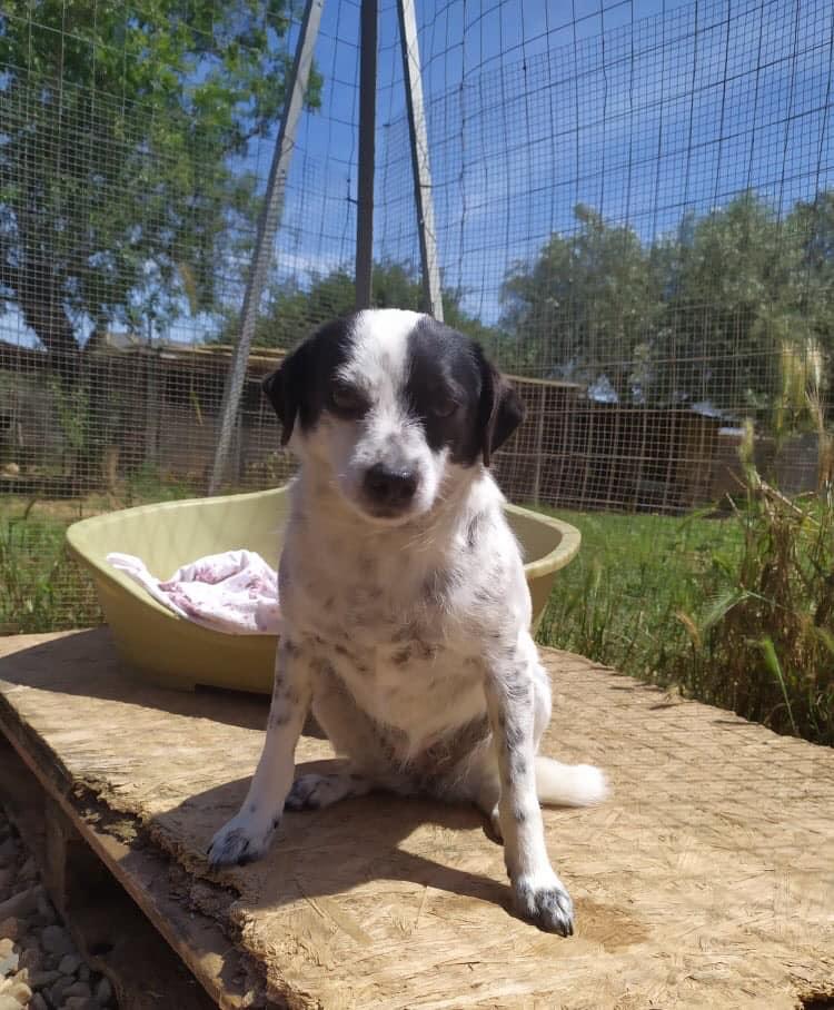 Adotta un cane - Deborah - Amici degli animali