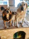 Adotta un cane - Flora Paolino Zoe - Amici degli animali