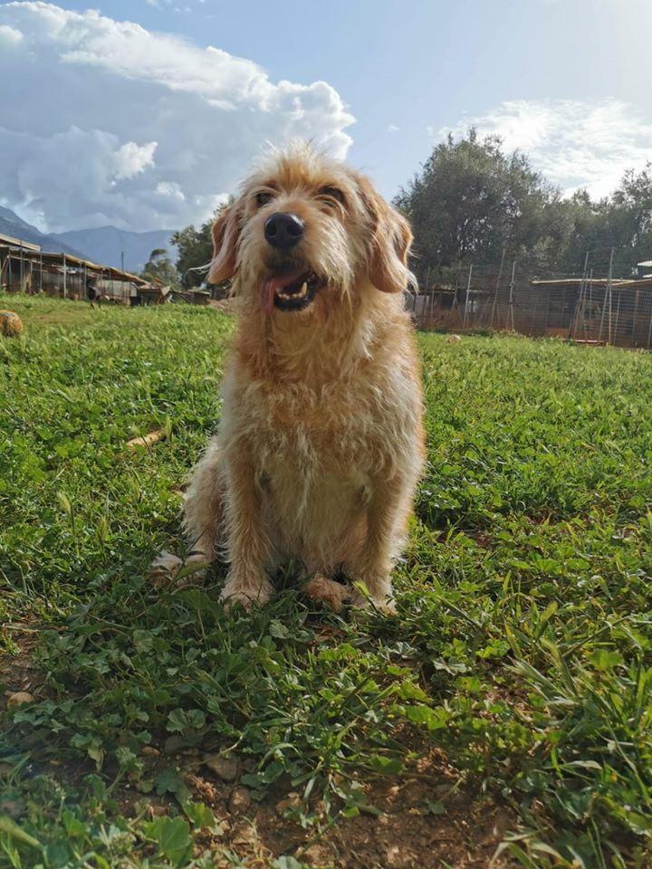 Adotta un cane - Frida - Amici degli animali