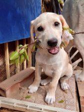 Adotta un cane - Lea - Amici degli animali