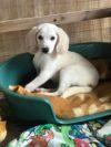 Adotta un cane - Luce - Amici degli animali