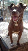 Adotta un cane - Miriam - Amici degli animali