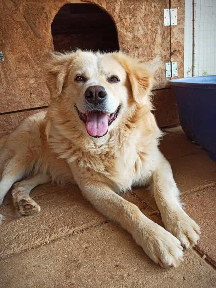 Adotta un cane - Soleil - Amici degli animali