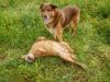 Adotta un cane - Zeus e Ambra - Amici degli animali